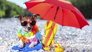 vacanze animali federcosnuamtori regole