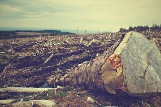 cibo, alberi, prodotti, deforestazione, federconsumatori