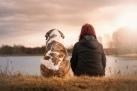 Animali, viaggi, dogsitter, federcconsumatori