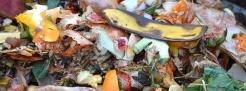 rifiuti, compost, economia circolare, sconto, tari, federconsumatori