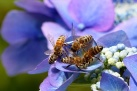 api. piante, ecosistemi, pesticidi, cambiamenti climatici, federconsumatori