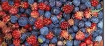 frutti di bosco.jpg